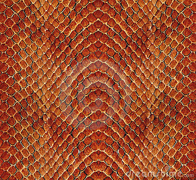 Free Snake Leather Royalty Free Stock Photos - 4769608