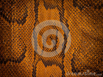 Snake Leather Background