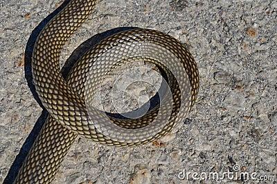 Snake letter