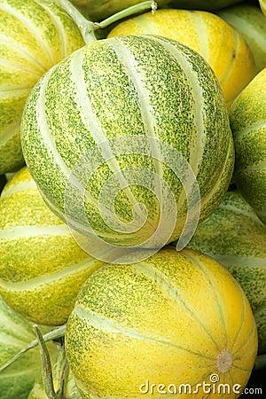 Snake melon