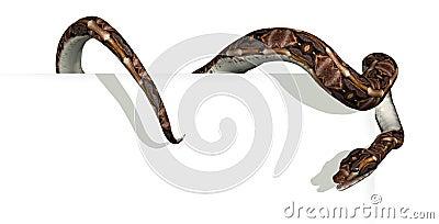 Snake on Sign Edge