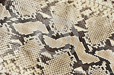 Snake skin leather