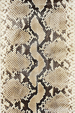 Snake skin leather (vertical)