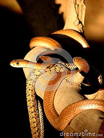 Snake on a Snake