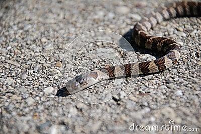 Snake on stones