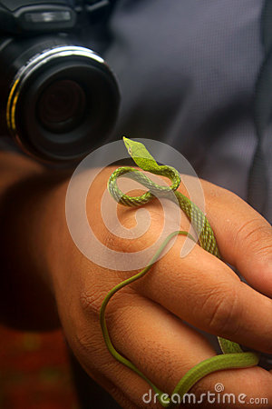 Snake Wildlife Photography