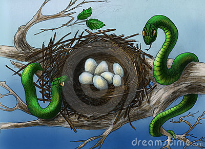 Snakes in the bird s nest