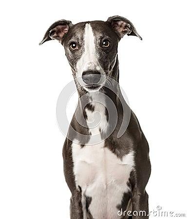 Free Snap Dog Sitting ,  Stock Photo - 89215590