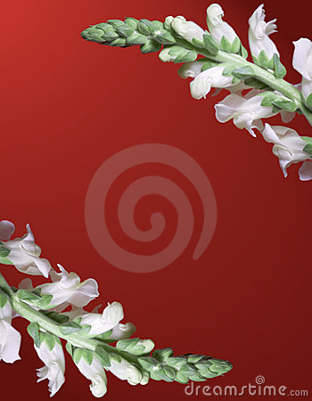 Snapdragon Border on Red Background