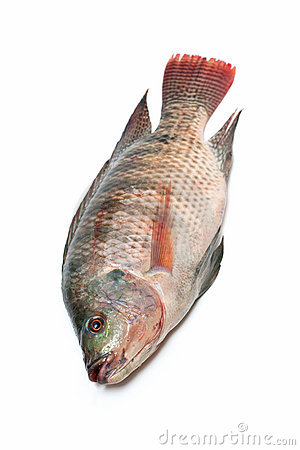 Snapper Fish Royalty Free Stock Image - Image: 19016026