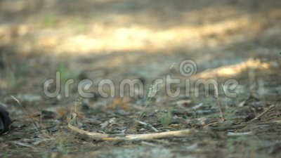 Sneaker shoe lying near corpse, body covered with tree branch, murder in woods. Stock footage stock video