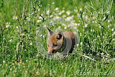 Sneaking through the Grassland