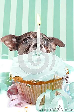 Sneaky cupcake dog