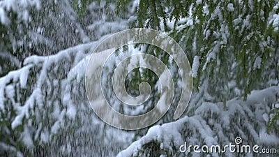Sneeuw die neer van spar, langzame motie vallen stock videobeelden