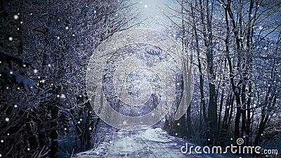 Sneeuw in het bos stock video