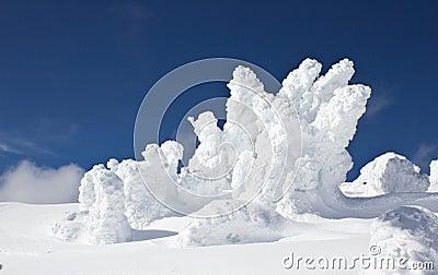 Sneeuw overspoelde bomen tegen blauwe hemel