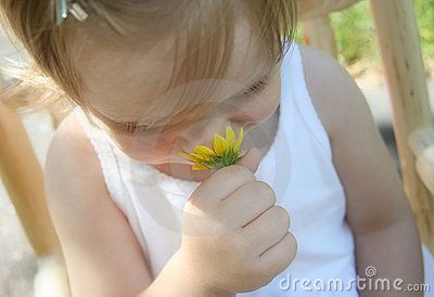 Sniffing daisies