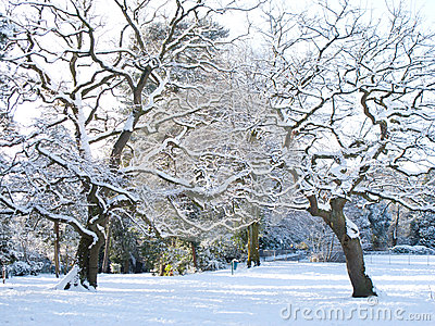 Snöig park