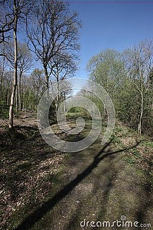 Snitterfield Büsche