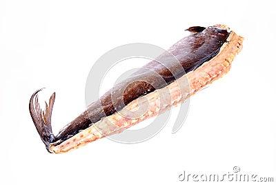 Snoek fish