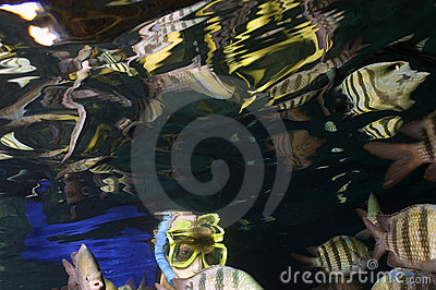 Snorkeler with distorted reflections