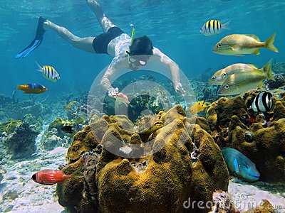 Snorkeling man looking a starfish in a coral reef