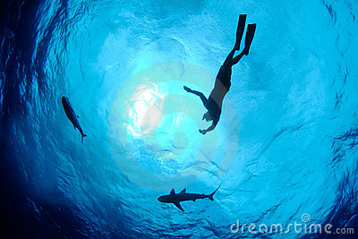 Snorkeler, shark and fish