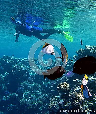Free Snorkeling Royalty Free Stock Image - 5375296