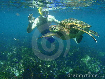 Snorkeling with a sea turtle Editorial Image
