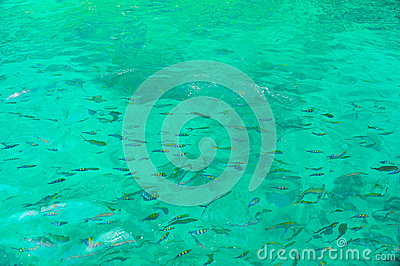 Snorkeling w otwartym morzu