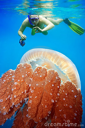 Free Snorkeling With Jellyfish Royalty Free Stock Photography - 12448607