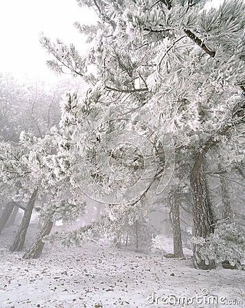Free Snow Royalty Free Stock Image - 16500516