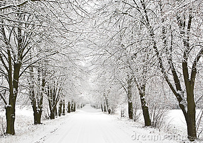 Snow alley