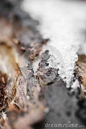 Free Snow And Frost On Tree Bark In Winter. Texture Royalty Free Stock Photography - 84876157