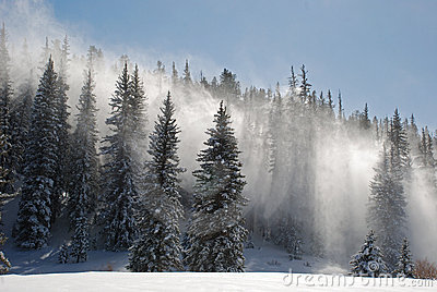 Snow Blows Through Trees