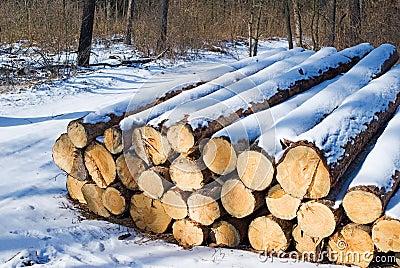 Snow bound firewoods