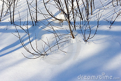 Snow bushes