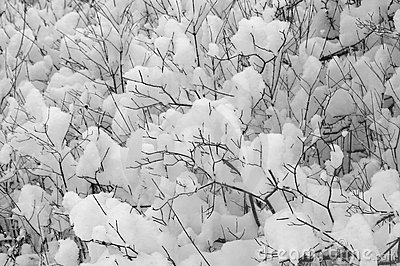 Snow on Bushes Stock Photo
