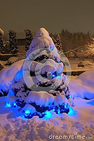 Free Snow Christmas Tree Royalty Free Stock Photos - 1595838