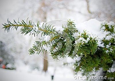 Snow on Christmas Tree