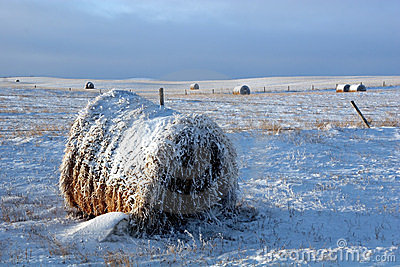 Snow Covered Bale in Field