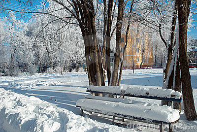 Snow covered bench near the trees