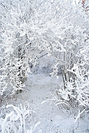 Free Snow Covered Branches Royalty Free Stock Image - 16315846