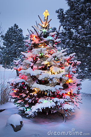 Free Snow Covered Christmas Tree Stands Out Brightly In Royalty Free Stock Photo - 32699705