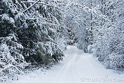 Snow covered driveway