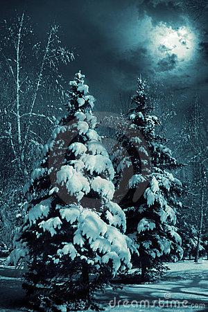 Free Snow-covered Evergreens Stock Photos - 3527323