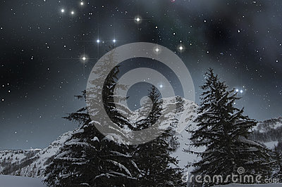 Snow covered firs under a starry sky