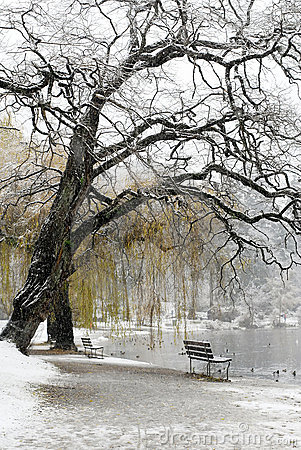 Snow Covered Lake and Bench