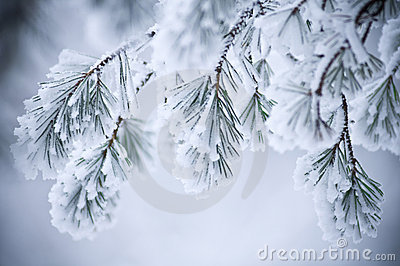 Snow covered leaves in winter