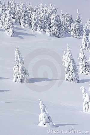 Snow covered mountain and trees